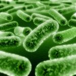 Active Bacteria (Enzyme) Technology